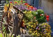 Belle charrette de fleurs