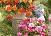 coin de jardin fleuri