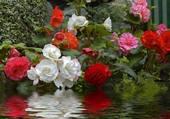 Fleurs au bord de l'eau