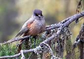 le petit oiseau