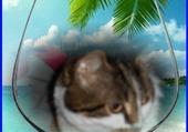 Puzzle Lili , aux îles