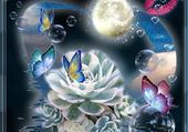 bulles et papillons