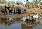 Eléphants et zèbres Kenia