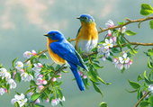 les oiseaux sont contents