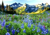 printemps en montagne