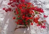 fleurs en Grèce