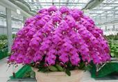 Parapluie d'orchidées