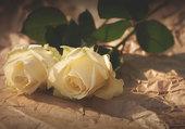les deux roses