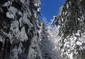 Puzzle Nature blanche