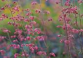 Puzzle fleurs sauvages
