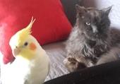 Une incroyable amitié