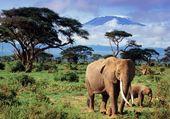 Eléphants et Kilimandjaro