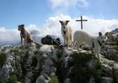 Podencos dans les Alpes