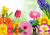 Méli-mélo de fleurs