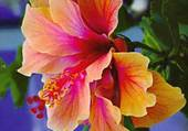 jolie fleur orange
