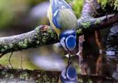 un oiseau narcissique