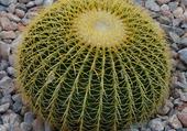 Joli cactus