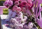 jolies fleurs sur un banc