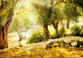 Puzzle les oliviers
