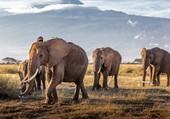 Eléphants du Mozambique