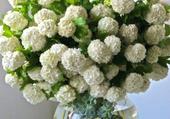 bouquet boules de neige