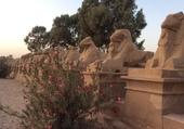Avenue des Sphinx Louxor Egypte