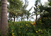Pointe des cononniers Ile Maurice