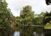 Puzzle Parc Pamplemousse Ile Maurice
