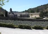 Abbaye de Senanque à Gordes (84)