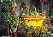 Exposition de fleurs