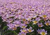Etendue de fleurs