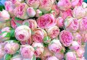 bouquet de roses pâle