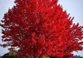Très bel arbre
