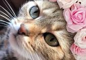 chat fleuri