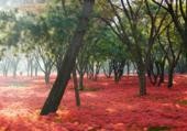 Tapis rouge de fleurs d'automne