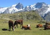 Puzzle Alpage de luxe Plateau Vamparis