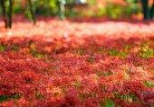 Sous bois d'automne