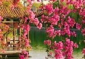jolie tombée de fleurs roses