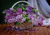 Paniers de lilas