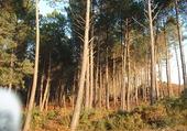 Puzzle Forêt des LANDES