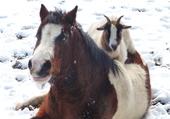 Biquette fait du poney