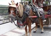 Cheval Espagnol de sortie pour la fête