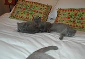 trois petits chats