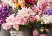 fleurs multiolores