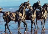 heather-jansch-Sculpture