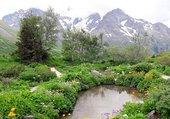 Puzzle Jardin botanique alpin du Lautaret