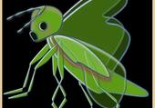 insecte vert par hbron