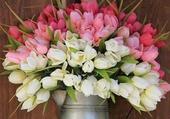 énorme bouquet de tulipes