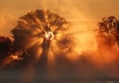 soleil levant à travers les branches