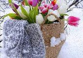 Fleurs de printemps dans la neige